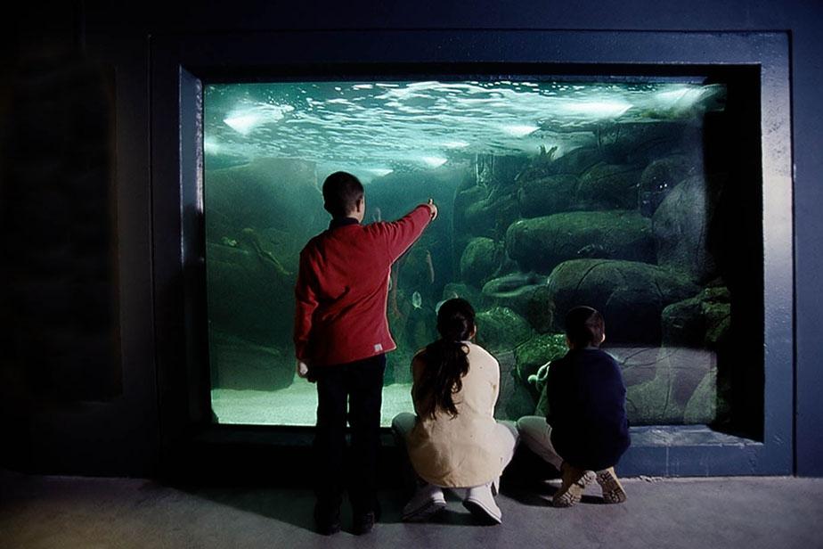 Des enfants devant un aquarium au marinarium de Concarneau en Finistère