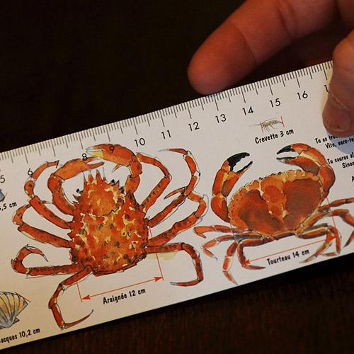 Une petite règle indique la taille réglementaire des crustacés et des fruits de mer pour la pêche à pied